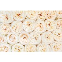 Karo-art Schilderij -Mooie verse rose en witte rozen, 100x70cm. Premium print