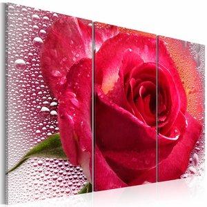 Schilderij - Vrouwelijke roos - 3 luik , rood , 60x40cm