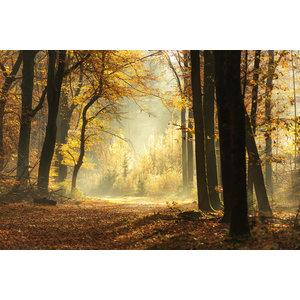 Karo-art Schilderij - Pad door een mistige bos tijdens een prachtige mistige herfst dag, 120x80cm  Premium print