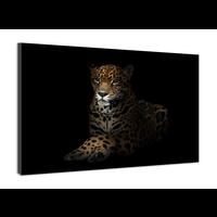 Karo-art Schilderij -Luipaard in het donker 2 , 100x70cm, premium print