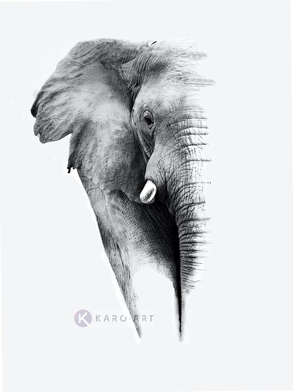Schilderij - Olifant op witte achtergrond, Grijs wit , 3 maten , Premium print - Copy