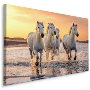 Schilderij - Galopperende paarden op het strand, multi-gekleurd, 4 maten, wanddecoratie