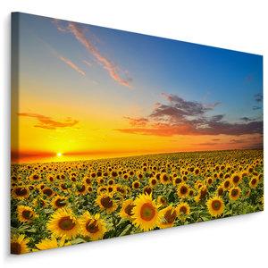 Schilderij - Zonnebloemen veld bij zonsondergang, multi-gekleurd, 4 maten, premium print