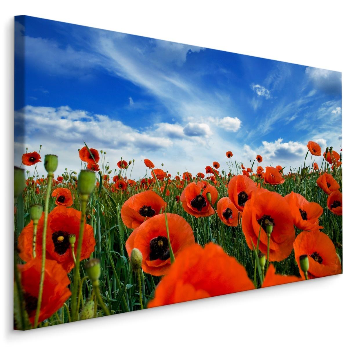 Schilderij - Klaprozen close up, blauw/groen/rood, 4 maten, premium print