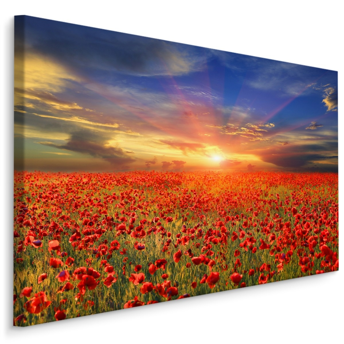 Schilderij - Klaprozen veld bij zonsondergang, multi-gekleurd, 4 maten, wanddecoratie