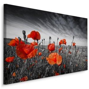 Schilderij - Rode Klaprozen, zwart-wit/rood, 4 maten, premium print