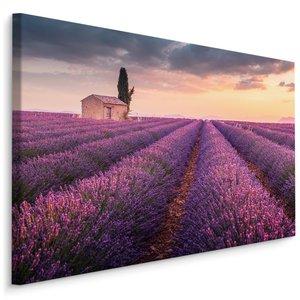 Schilderij - Lavendelveld bij zonsondergang, paars, 4 maten, wanddecoratie