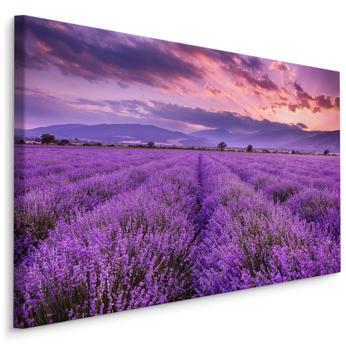 Schilderij Lavendelveld, paars, 4 maten, wanddecoratie