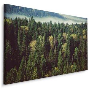 Schilderij - Groen bos met mist, 4 maten, premium print