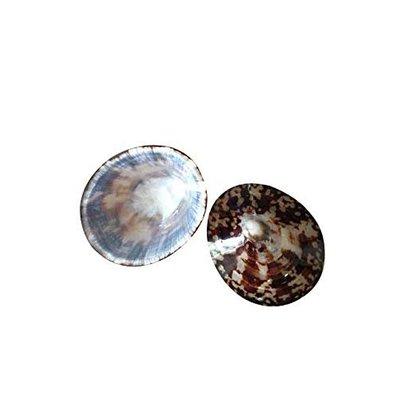 Borstvoedings schelpen ( echte schelpen)