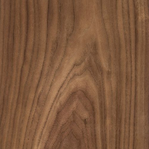 Wall Dragon Sunburst - American Walnut