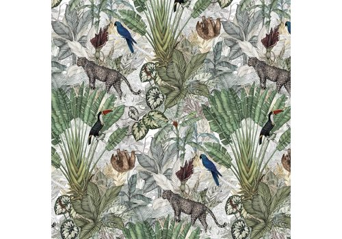 Jimmy Cricket Wallpaper JUNGLE