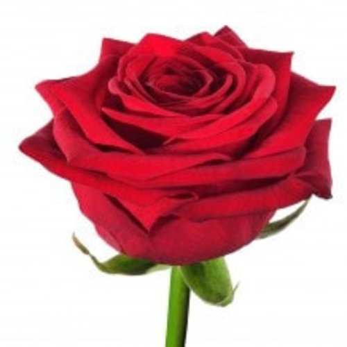 Rozen.nl  20 Red Roses + prosecco + card offer