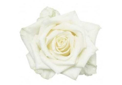 Rozen.nl White Naomi - White roses - 60 pieces