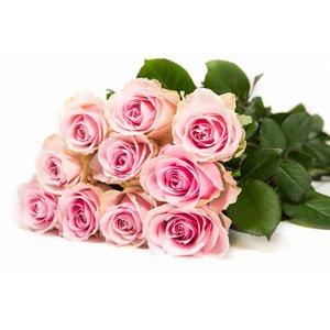 Rozen.nl 100 Pink Avalanche+