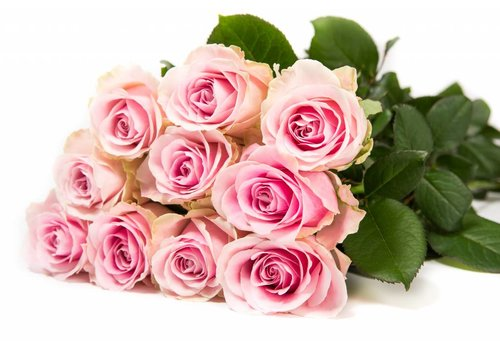 Rozen.nl Avalanche+ - Pink roses - 100 pieces