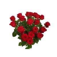 20 Rote Rosen angebot