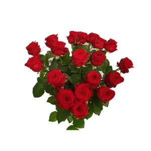 Rozen.nl 20 Red Roses offer