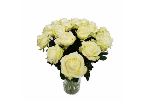 Rozen.nl Avalanche+ - Witte rozen - 50 stuks