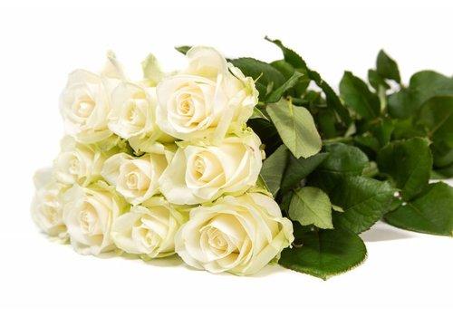 Rozen.nl Avalanche+ - White roses - 100 pieces