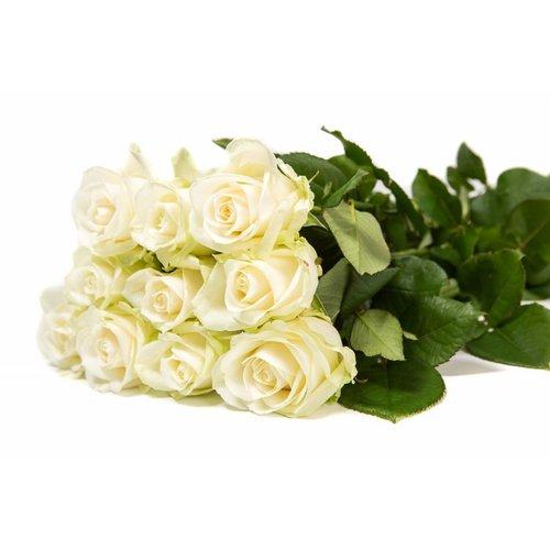 Rozen.nl 100 Avalanche+ roses