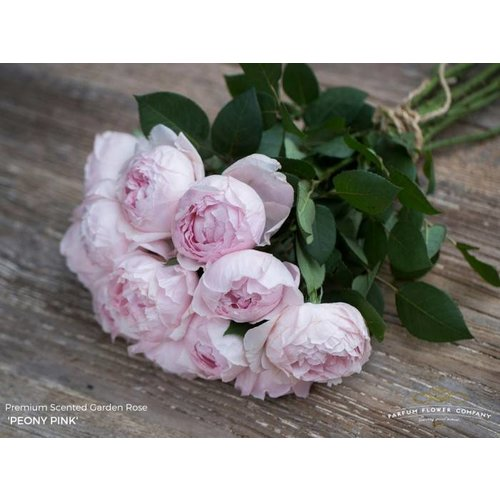 Rozen.nl Peony Pink 12