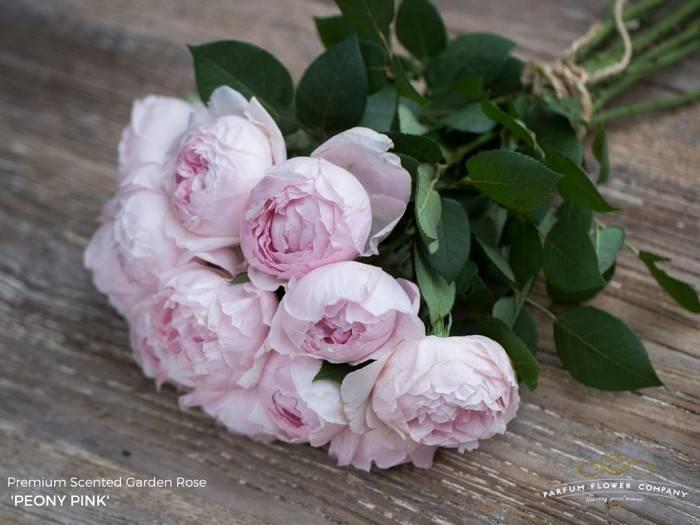 Rozen.nl 12 Peony Pink
