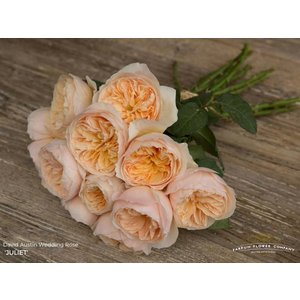 Rozen.nl 12 David Austin Juliet