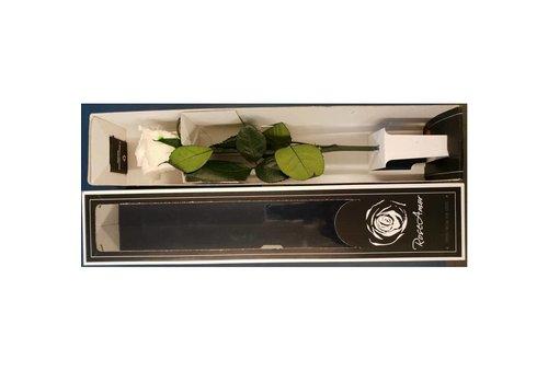 Rozen.nl Stabilised rose White / Red with 30cm stem
