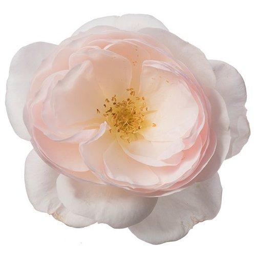 Rozen.nl Eetbare rozen Delicate
