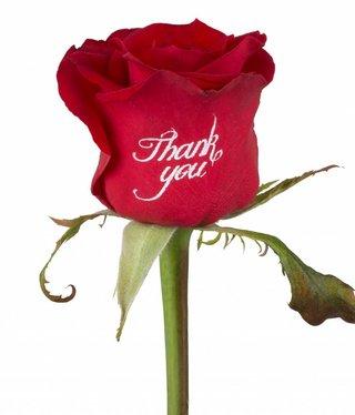 Bedrukte rode rozen