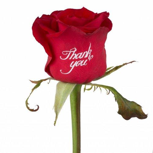 Rozen.nl Bedrukte rode rozen