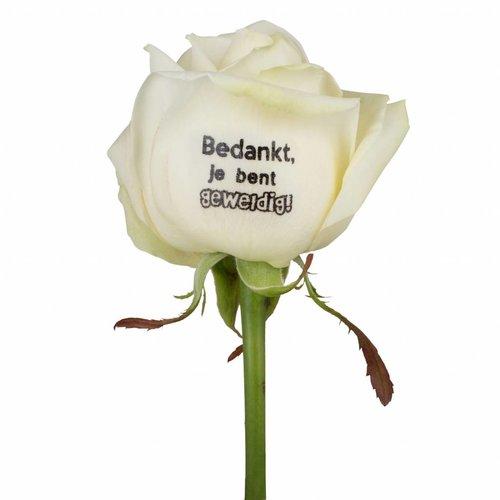 Rozen.nl Bedrukte witte rozen