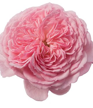 Rozen.nl Eetbare rozen Sweet