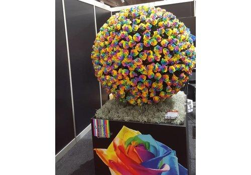 Rozen.nl Rainbow roses