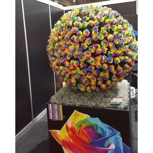 Rozen.nl Rainbow rosen