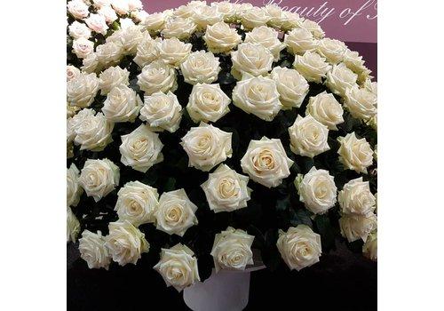 Rozen.nl White Naomi - White roses - 100 pieces