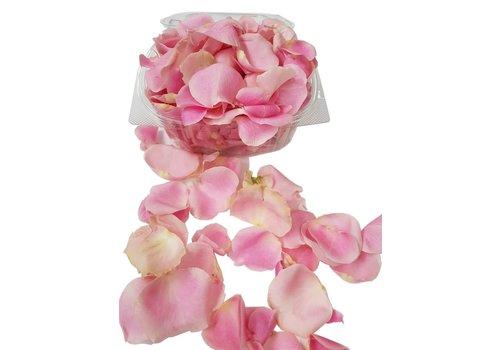 Rozen.nl Pink rose petals