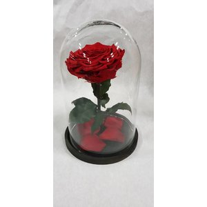 Stolp mit longlife  rose XXL