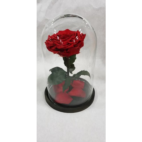Bell Jar with longlife Rose XXL