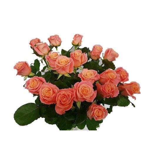 Rozen.nl 20 roze rozen Miss Piggy