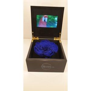 rozen.nl VIDEO BOX MET LONGLIFE ROOS (ROZEN)