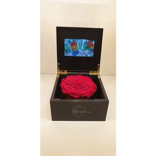 Rozen.nl VIDEO BOX MIT HALTBARE ROSE