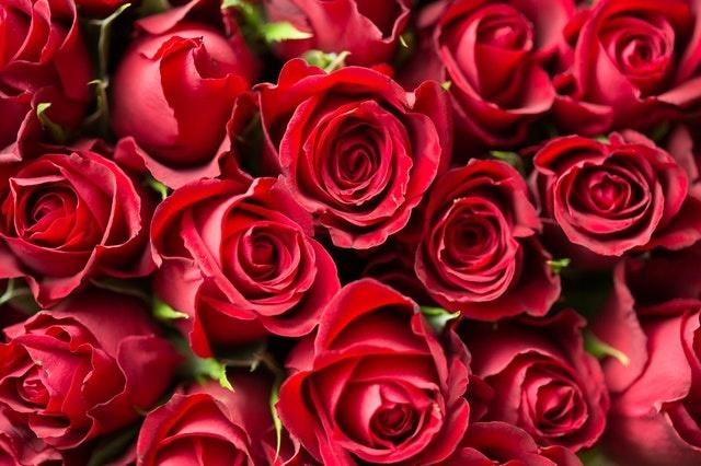 Verras jouw geliefde op Valentijnsdag met Rozen!