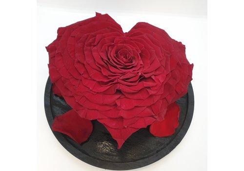 Rozen.nl Rose Longlife härz XXXL