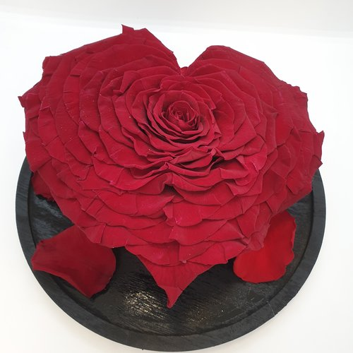 Rozen.nl Rose Longlife heart XXXL