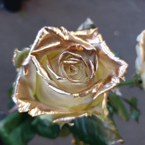 Rozen.nl White Naomi - Gold paint