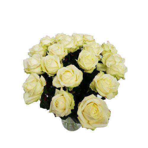 Rozen.nl 20 weisse rosen angebot