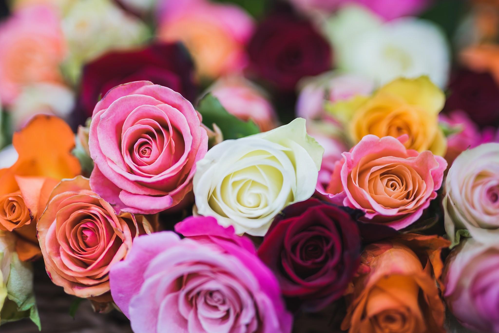 Op zoek naar bloemen voor in huis? Kies voor Rozen!