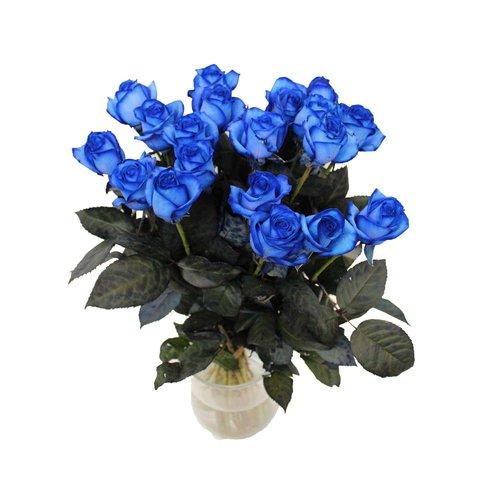 Koop nu speciale rozen in de kleur blauw